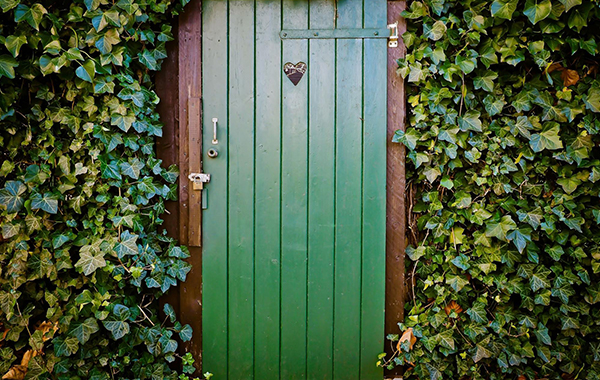 A green front door surrounded by crawling ivy leaves